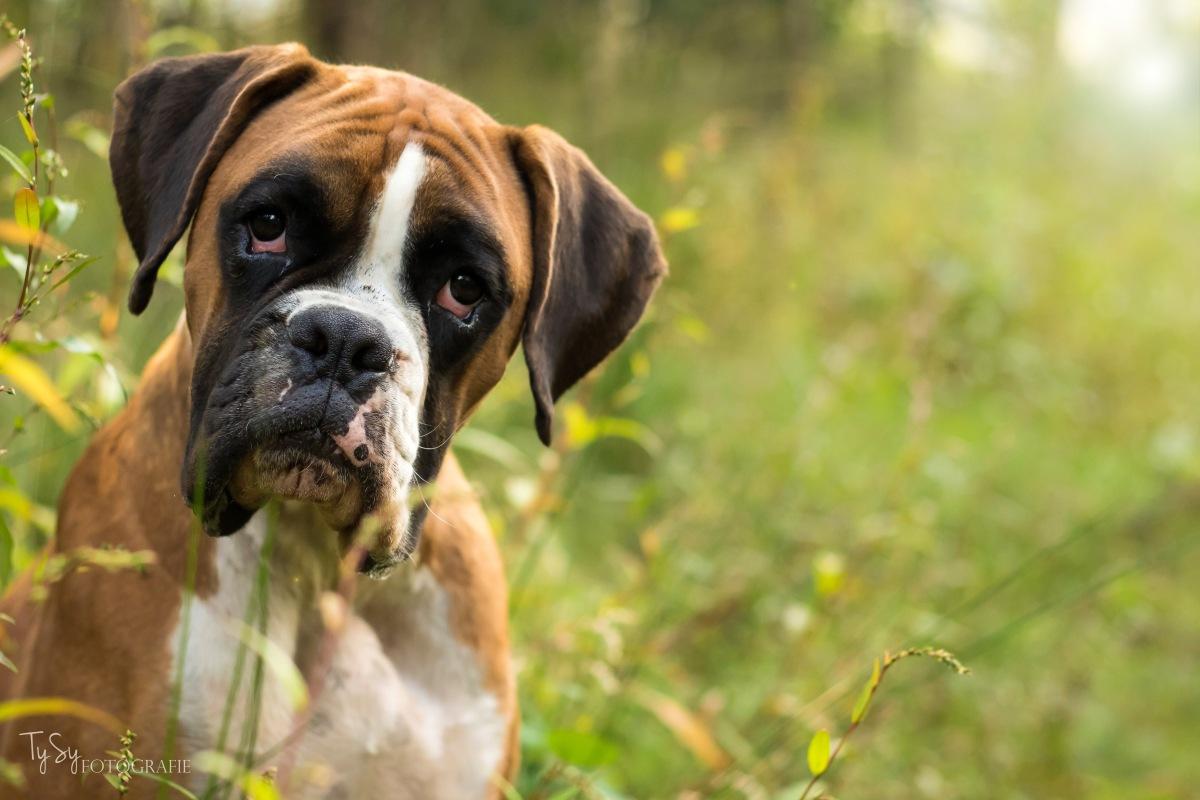 Hondenfotoshoot Eindhoven