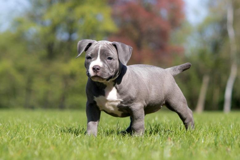 Pup2-9639