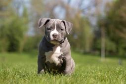 Pup2-9649