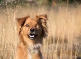 hondenfotografie eindhoven