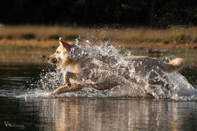 actiefoto hond